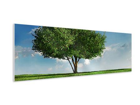 Hartschaumbild Panorama Baum im Grün