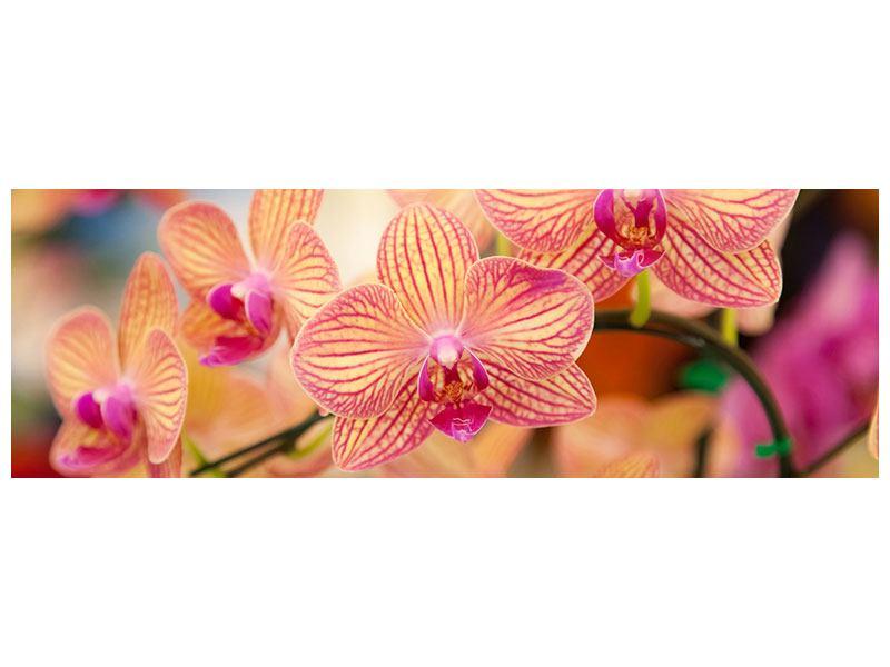 Hartschaumbild Panorama Exotische Orchideen