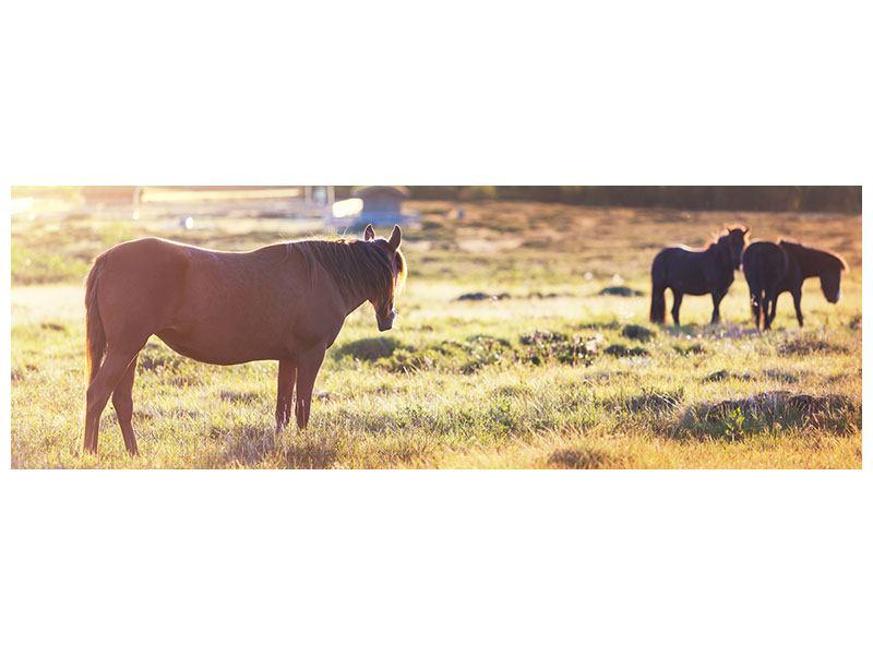 Hartschaumbild Panorama Wilde Pferde