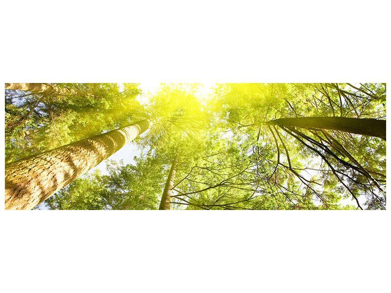 Hartschaumbild Panorama Baumkronen in der Sonne