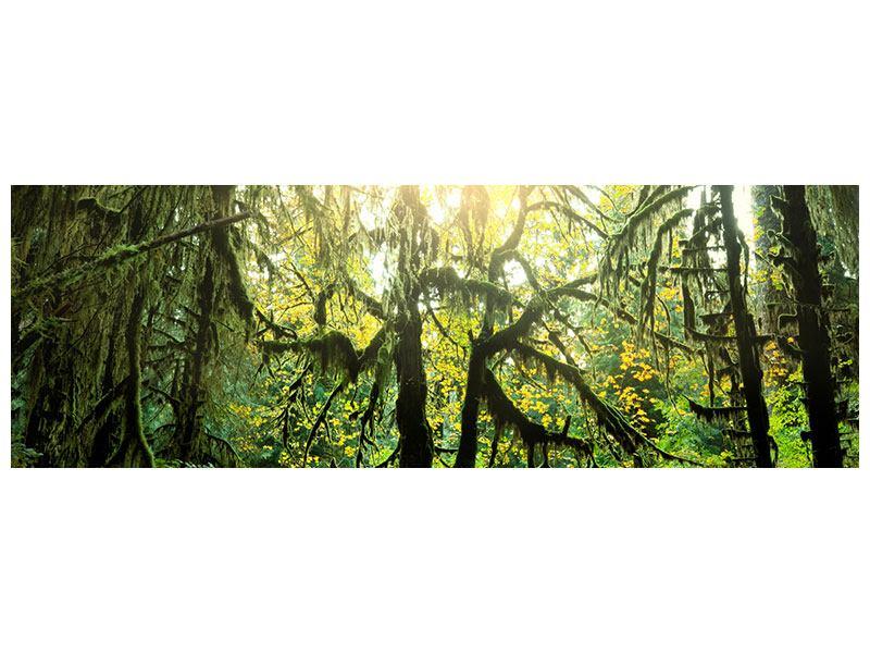 Hartschaumbild Panorama Verträumter Wald
