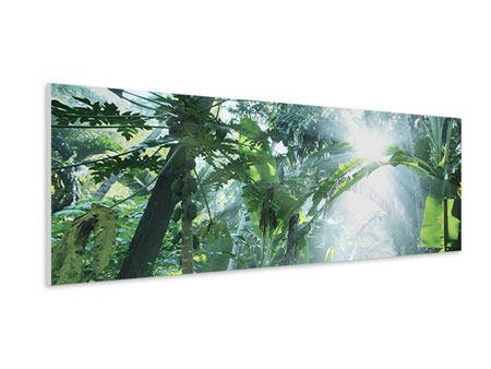 Hartschaumbild Panorama Dschungelstar