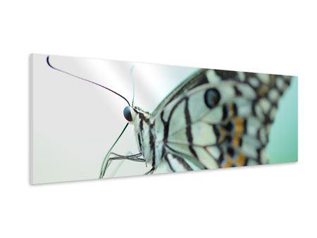 Hartschaumbild Panorama Schmetterling XXL