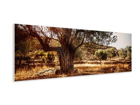Hartschaumbild Panorama Olivenhain