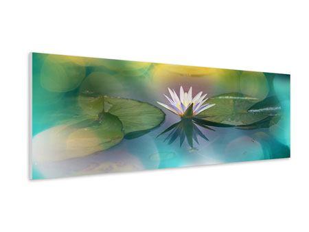 Hartschaumbild Panorama Lotus-Spiegelung