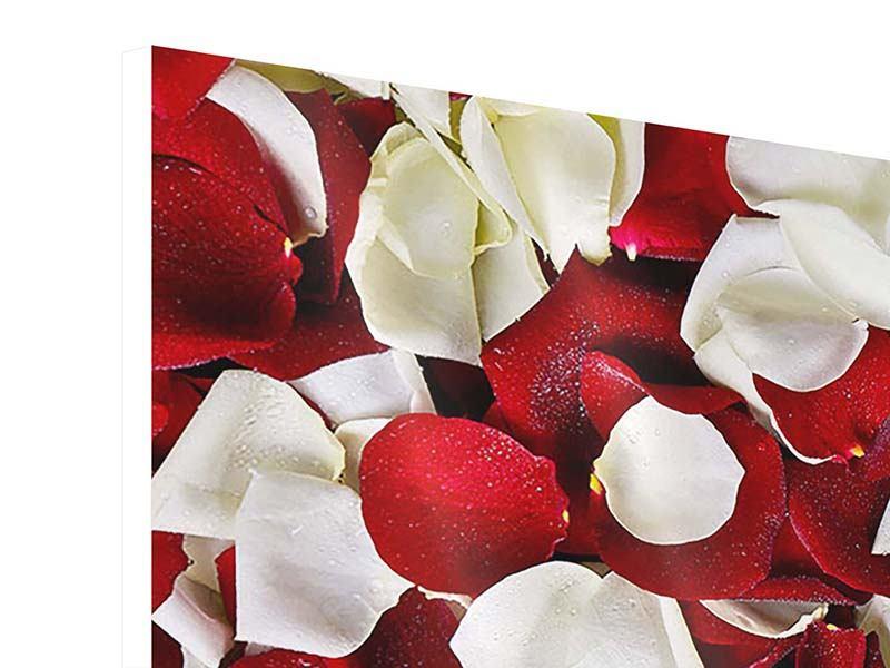 Hartschaumbild Panorama Rosenblätter