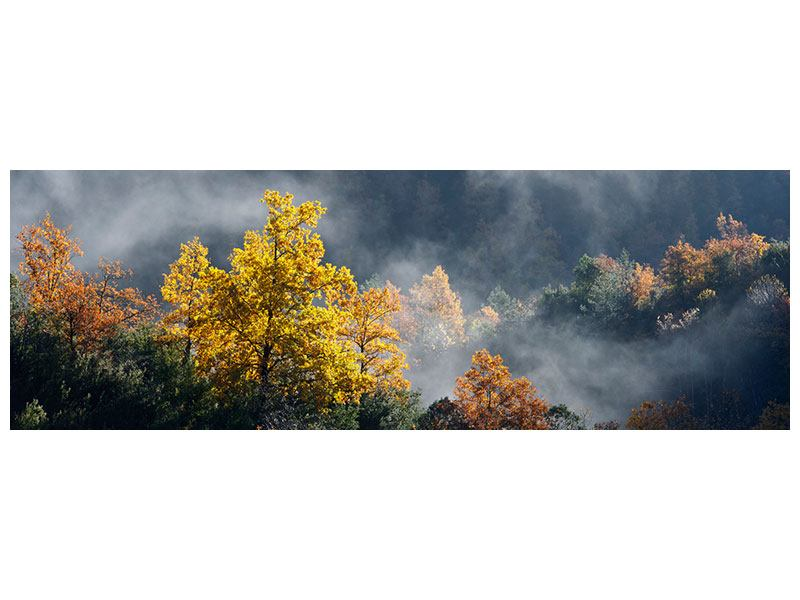 Hartschaumbild Panorama Mondscheinwald