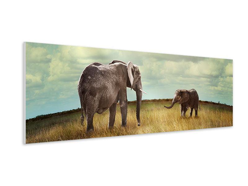 Hartschaumbild Panorama Elefanten und Feng Shui