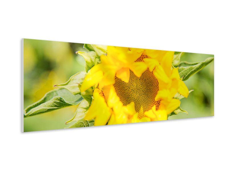 Hartschaumbild Panorama Wilde Sonnenblume