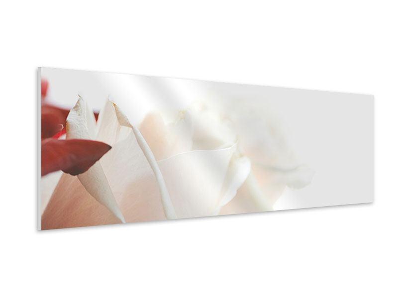 Hartschaumbild Panorama Herrliche Rosen