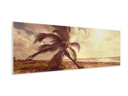 Hartschaumbild Panorama Die schiefe Palme