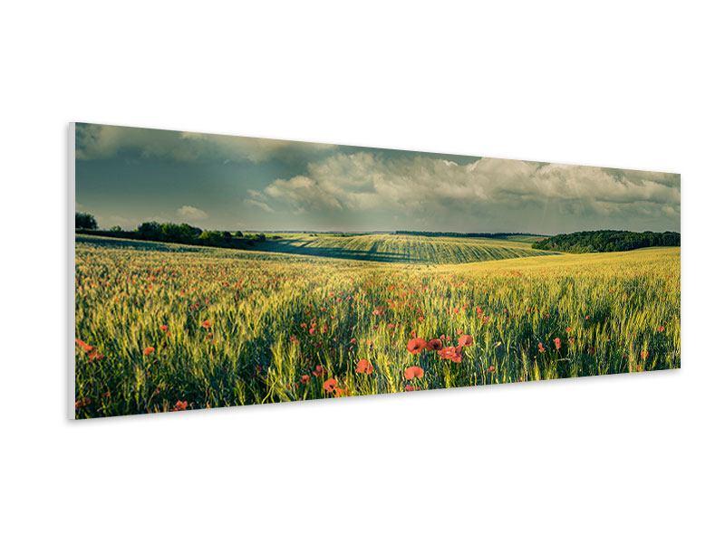 Hartschaumbild Panorama Der Mohn im Weizenfeld