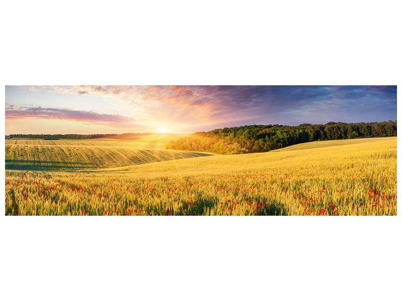 Hartschaumbild Panorama Ein Blumenfeld bei Sonnenaufgang