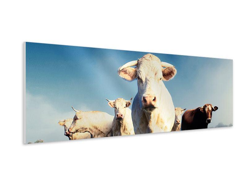 Hartschaumbild Panorama Kühe