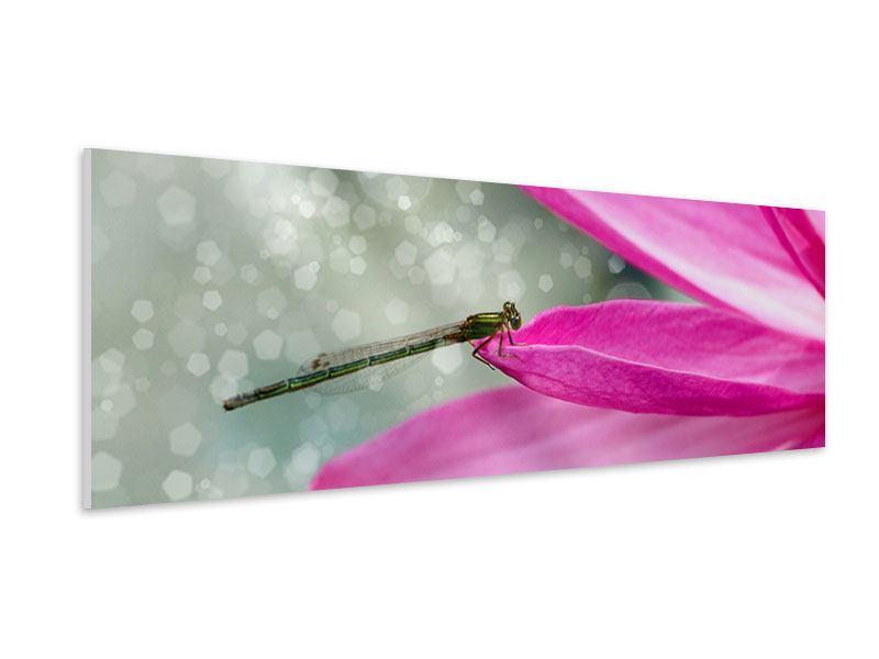 Hartschaumbild Panorama Libelle auf dem Seerosenblatt