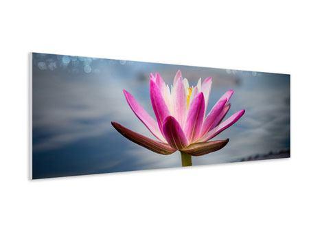 Hartschaumbild Panorama Lotus im Morgentau