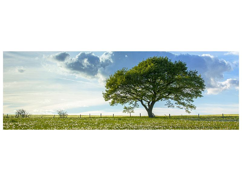 Hartschaumbild Panorama Frühlingsbaum