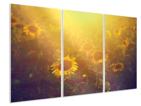 Hartschaumbild 3-teilig Sonnenblumen im goldenen Licht