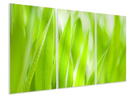 Hartschaumbild 3-teilig Gras XXL