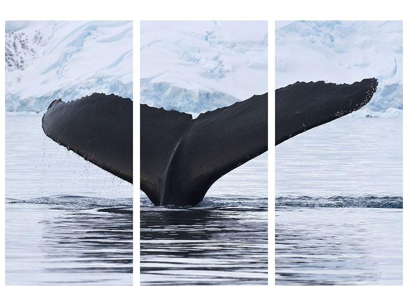 Hartschaumbild 3-teilig Der Buckelwal