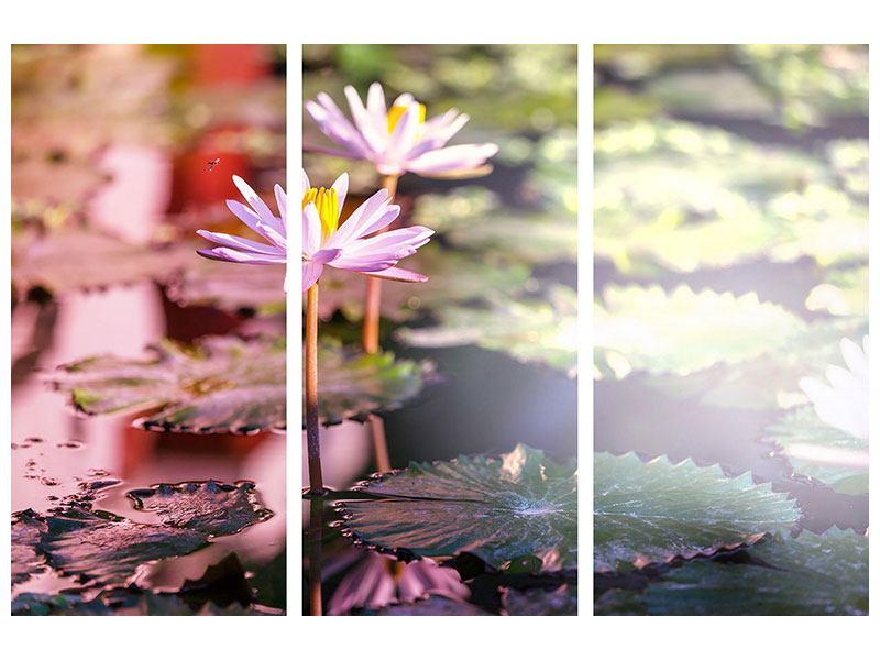 Hartschaumbild 3-teilig Seerosen im Teich