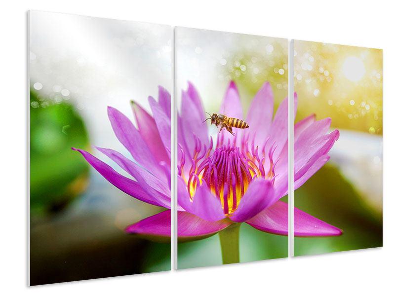 Hartschaumbild 3-teilig Die Lotus mit Biene
