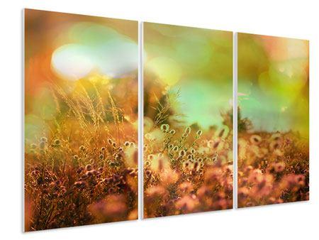 Hartschaumbild 3-teilig Blumenwiese in der Abenddämmerung