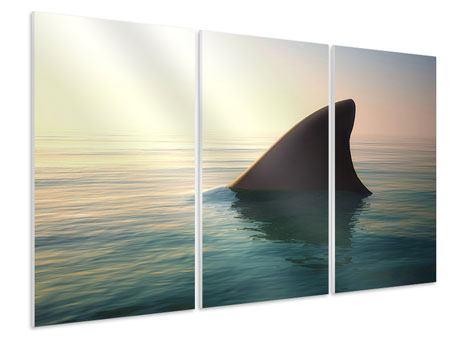 Hartschaumbild 3-teilig Haifischflosse