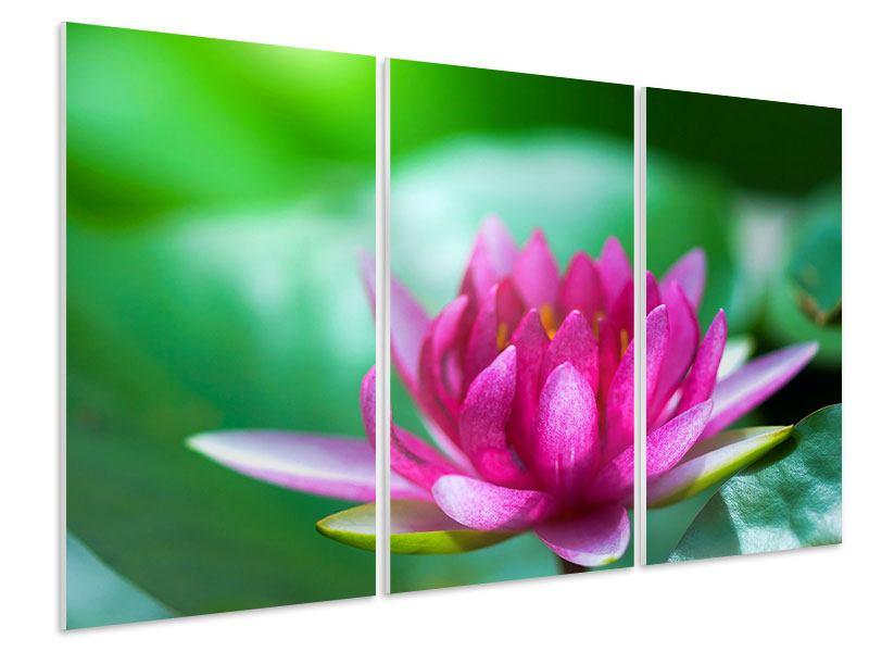 Hartschaumbild 3-teilig Lotus in Pink