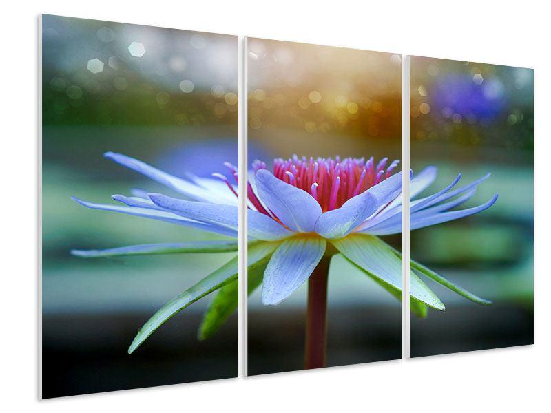 Hartschaumbild 3-teilig Pretty Lotus