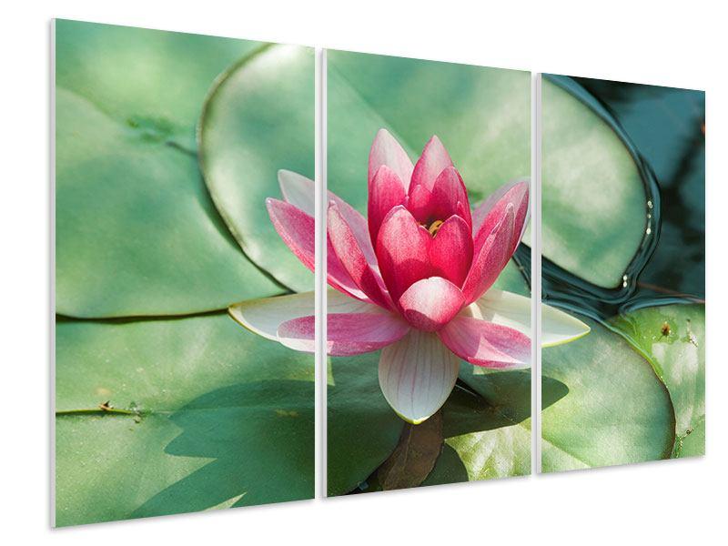 Hartschaumbild 3-teilig Der Frosch und das Lotusblatt