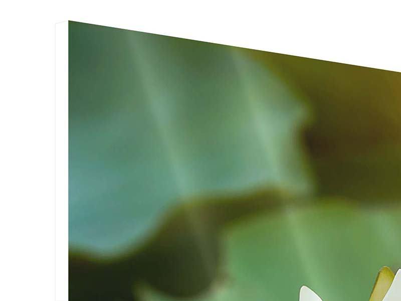 Hartschaumbild 3-teilig Romantische Seerose