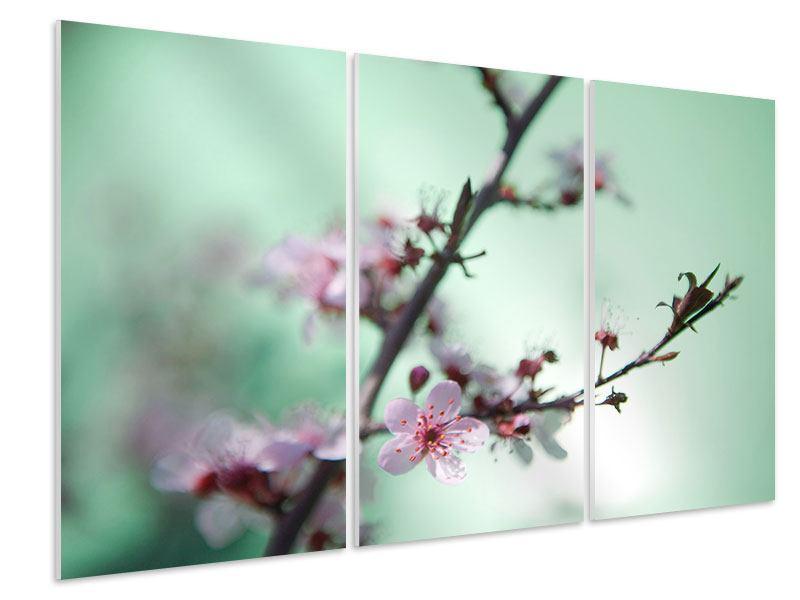 Hartschaumbild 3-teilig Die japanische Kirschblüte