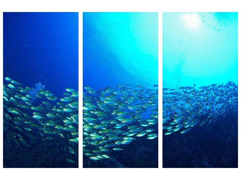 Hartschaumbild 3-teilig Fischschwarm