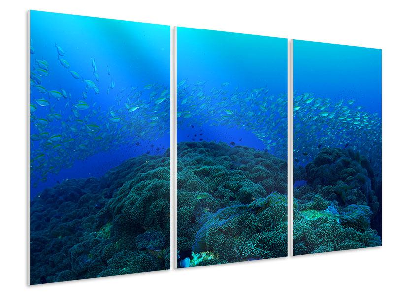 Hartschaumbild 3-teilig Fischschwärme