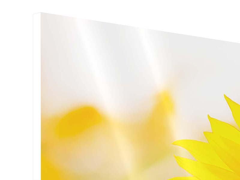 Hartschaumbild 3-teilig Sunflower