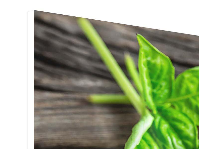 Hartschaumbild 3-teilig Basilikumblätter