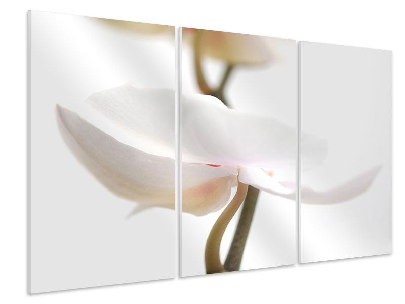 Hartschaumbild 3-teilig XXL Orchideenblüte