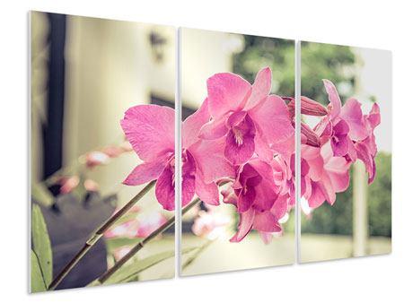 Hartschaumbild 3-teilig Ein Fensterplatz für die Orchideen