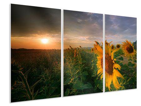 Hartschaumbild 3-teilig Sonnenblumen im Lichtspiel