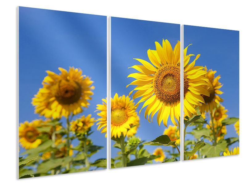 Hartschaumbild 3-teilig Himmlische Sonnenblumen