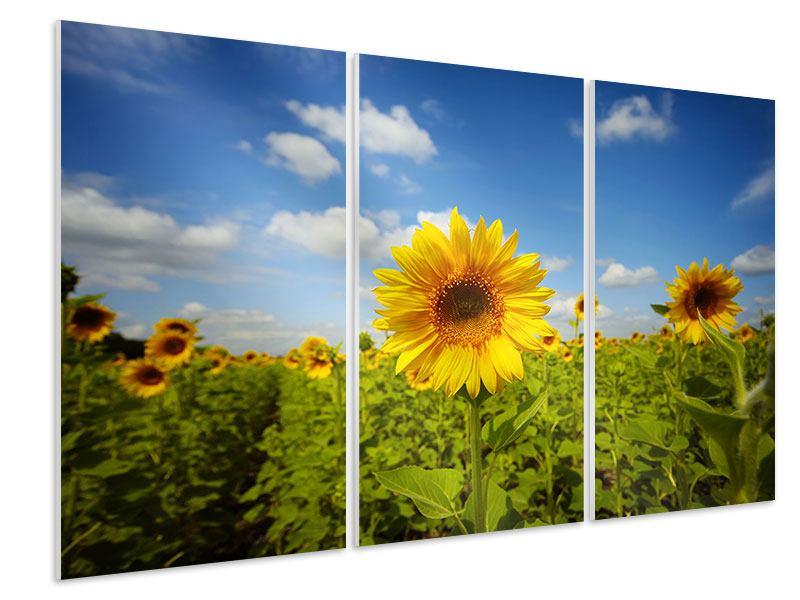 Hartschaumbild 3-teilig Sommer-Sonnenblumen