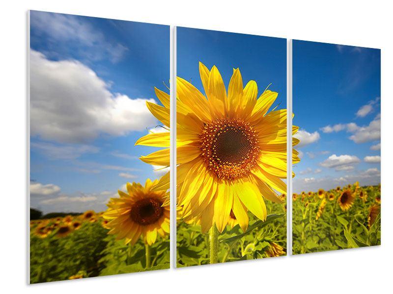 Hartschaumbild 3-teilig Das Feld der Sonnenblumen