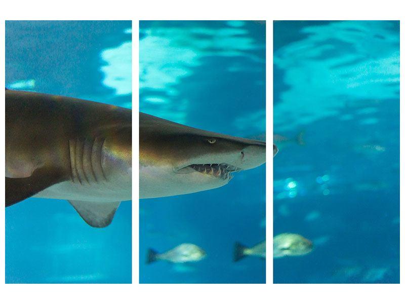 Hartschaumbild 3-teilig Der Haifisch
