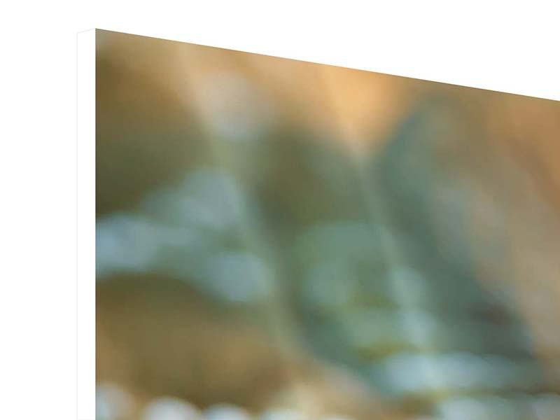 Hartschaumbild 3-teilig Viper