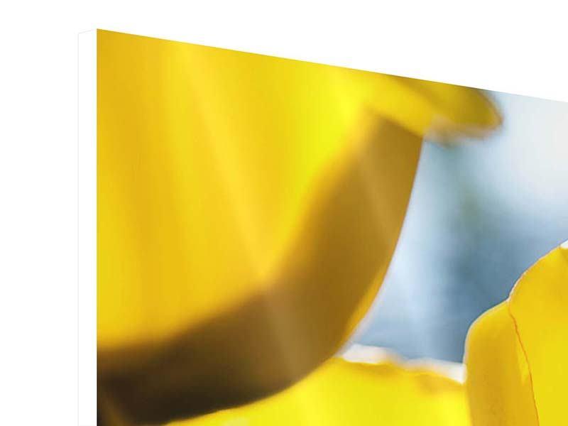 Hartschaumbild 3-teilig Gelbe Tulpen in XXL