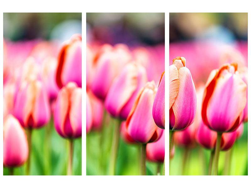 Hartschaumbild 3-teilig Pretty in Pink