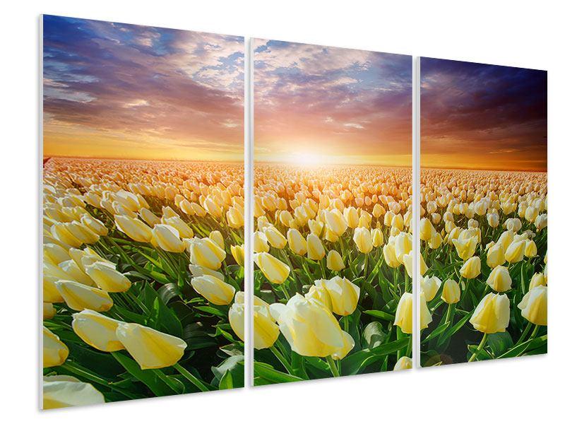 Hartschaumbild 3-teilig Sonnenaufgang bei den Tulpen
