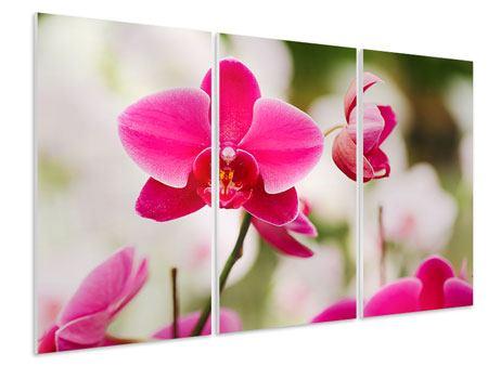 Hartschaumbild 3-teilig Perspektivische Orchideen
