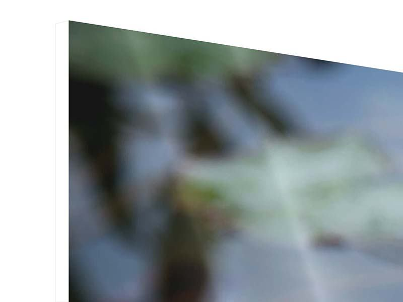 Hartschaumbild 3-teilig Das Seerosenduo